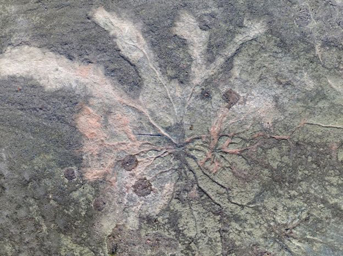 Hóa thạch rừng ma cổ quái nhất thế giới lộ diện ở New York - Ảnh 1.