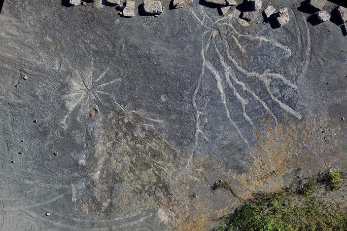 Hóa thạch rừng ma cổ quái nhất thế giới lộ diện ở New York - Ảnh 2.