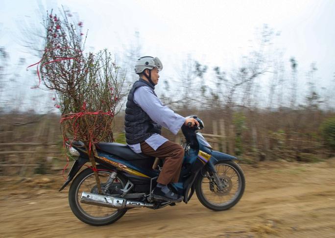 Đào Nhật Tân nở rộ, nhiều tuyến phố Hà Nội ngập tràn sắc xuân - Ảnh 12.