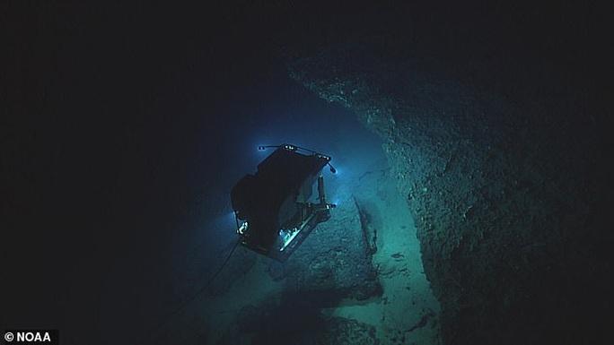 Cá có chân ở vịnh Mexico - Ảnh 4.