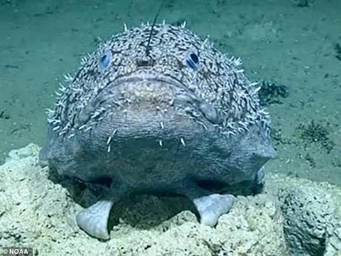 Cá có chân ở vịnh Mexico - Ảnh 1.