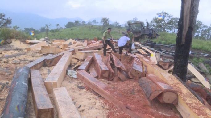 Khởi tố 10 đối tượng mở công trường khai thác gỗ ở 2 tỉnh Đắk Lắk - Khánh Hòa - Ảnh 1.