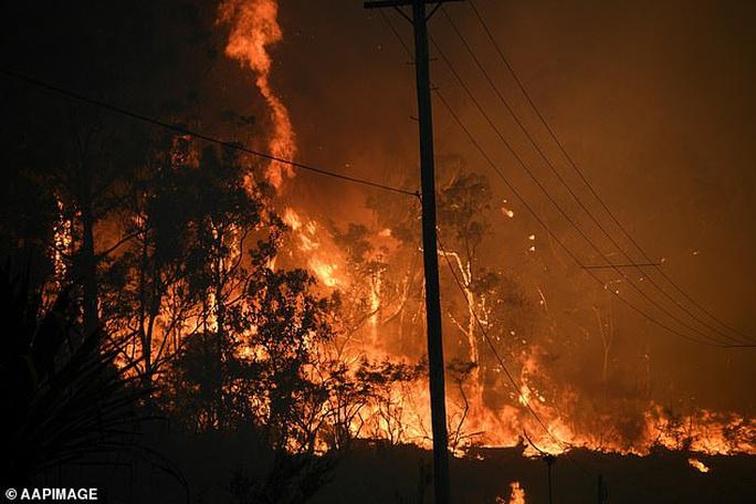 Cháy rừng ở Úc: Động vật hoang dã bỏ chạy về phố - Ảnh 1.