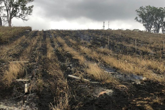 Cháy rừng ở Úc: Động vật hoang dã bỏ chạy về phố - Ảnh 4.