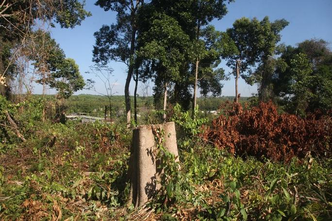 Đồng Nai vào cuộc làm rõ một vụ phá rừng trong khu bảo tồn - Ảnh 1.