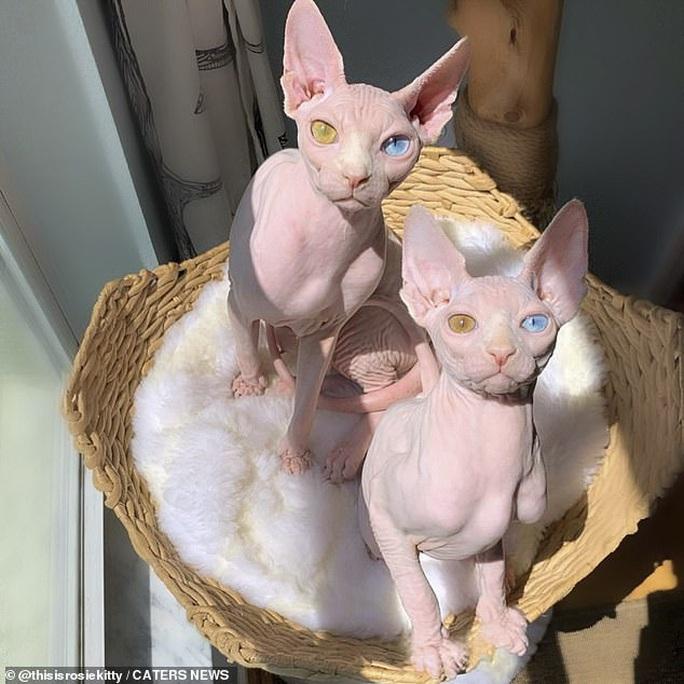 Cặp mèo với 2 màu mắt khác nhau gây bão mạng xã hội - Ảnh 4.