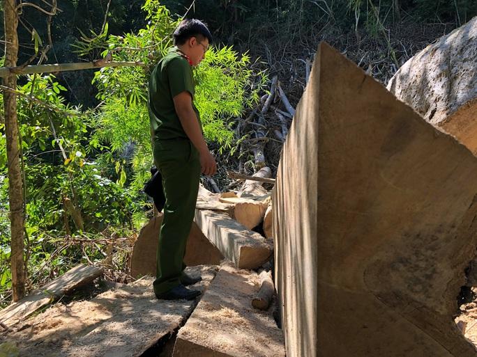 Làm rõ 7 đối tượng phá rừng, tập kết gỗ lậu sát nách trạm kiểm lâm - Ảnh 3.