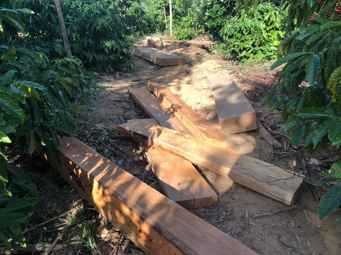 Một vụ phá rừng, sở báo 3,5m3, hạt nói 28m3, công an xác định 41m3 ! - Ảnh 2.