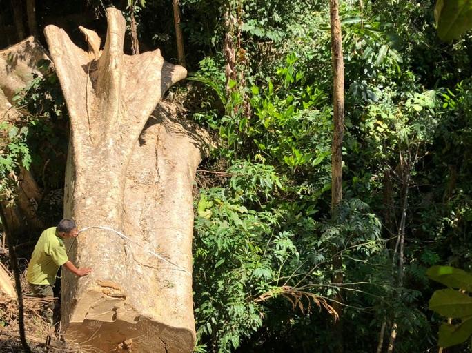 Làm rõ 7 đối tượng phá rừng, tập kết gỗ lậu sát nách trạm kiểm lâm - Ảnh 1.