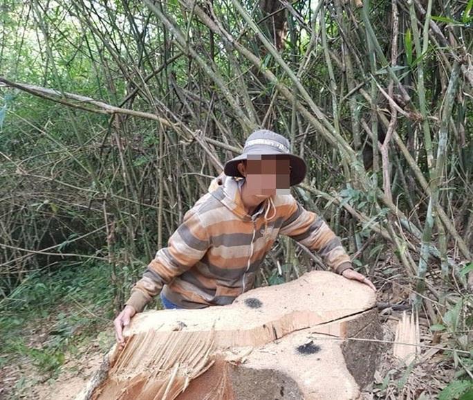 Một vụ phá rừng, sở báo 3,5m3, hạt nói 28m3, công an xác định 41m3 ! - Ảnh 7.