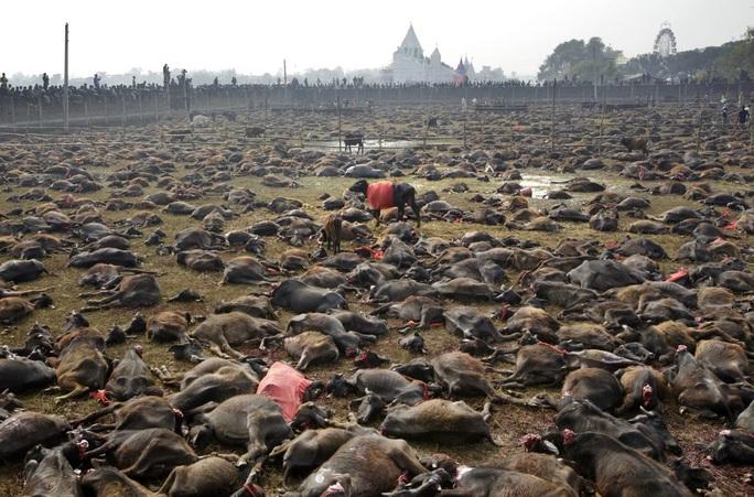 Rợn người tại lễ hiến tế động vật đẫm máu nhất thế giới - Ảnh 1.