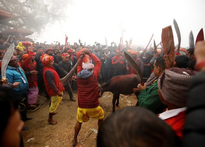 Rợn người tại lễ hiến tế động vật đẫm máu nhất thế giới - Ảnh 3.