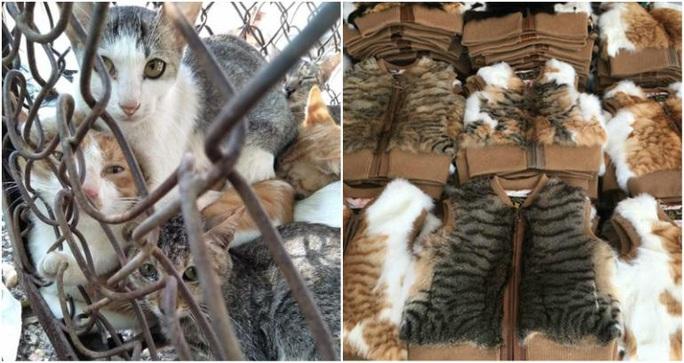 Số phận bi thảm của những con mèo bị luộc sống ở Trung Quốc - Ảnh 1.