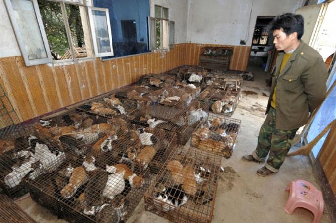 Số phận bi thảm của những con mèo bị luộc sống ở Trung Quốc - Ảnh 2.