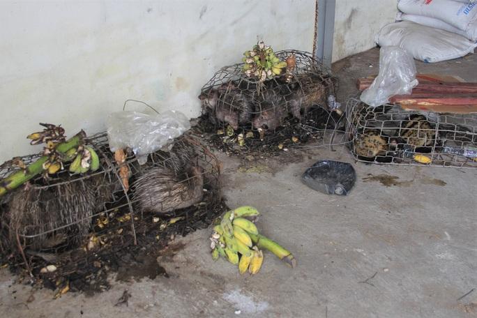 Quảng Trị: Vướng thẩm quyền xử lý, hàng chục thú rừng chết dần trong kho hải quan - Ảnh 1.