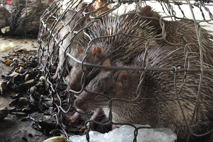 Quảng Trị: Vướng thẩm quyền xử lý, hàng chục thú rừng chết dần trong kho hải quan - Ảnh 3.