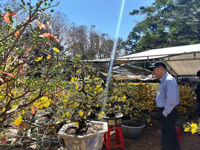 Nông sản rớt giá, các nhà vườn giảm giá bán chạy hoa kiểng - Ảnh 2.