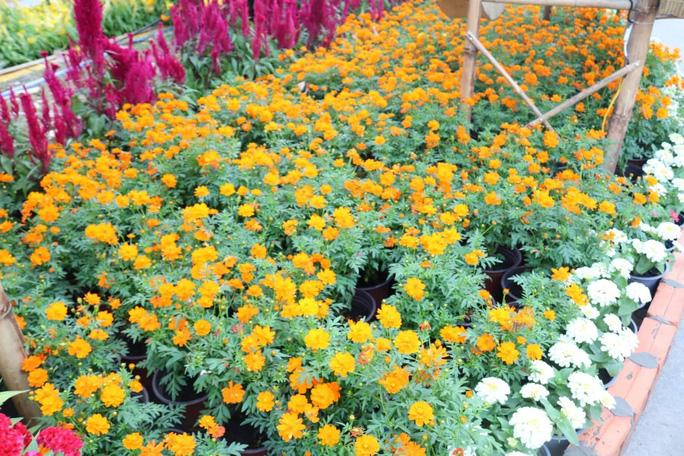 Đường hoa nghệ thuật Cần Thơ rực rỡ khi được lắp 80.000 chậu hoa tươi - Ảnh 4.