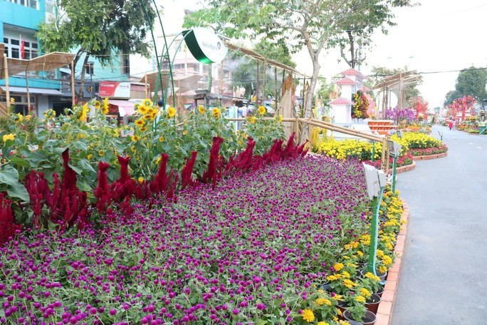 Đường hoa nghệ thuật Cần Thơ rực rỡ khi được lắp 80.000 chậu hoa tươi - Ảnh 6.