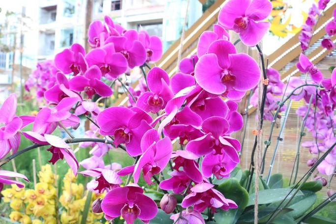 Đường hoa nghệ thuật Cần Thơ rực rỡ khi được lắp 80.000 chậu hoa tươi - Ảnh 11.