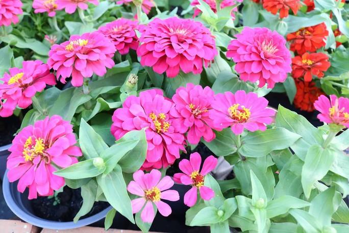 Đường hoa nghệ thuật Cần Thơ rực rỡ khi được lắp 80.000 chậu hoa tươi - Ảnh 10.