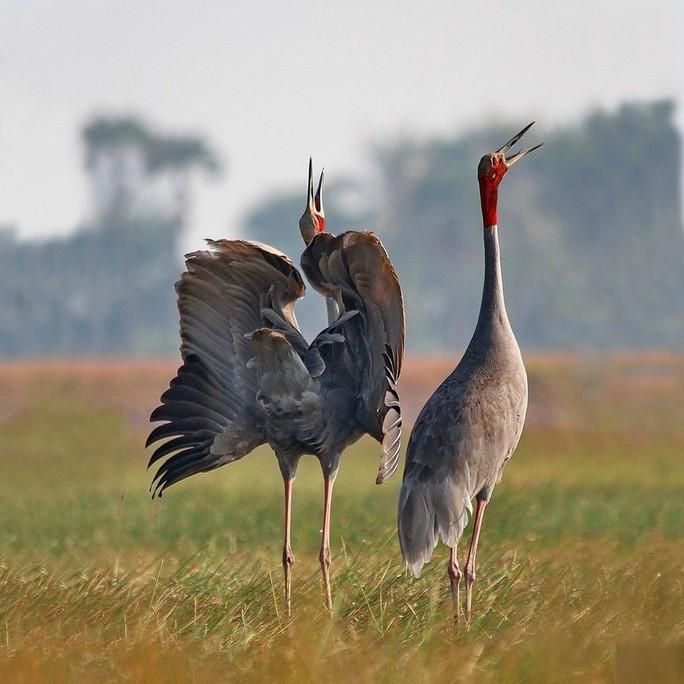 BÀI TẾT CỦA THỜI SỰ: Câu chuyện về những loài chim trời - Ảnh 1.
