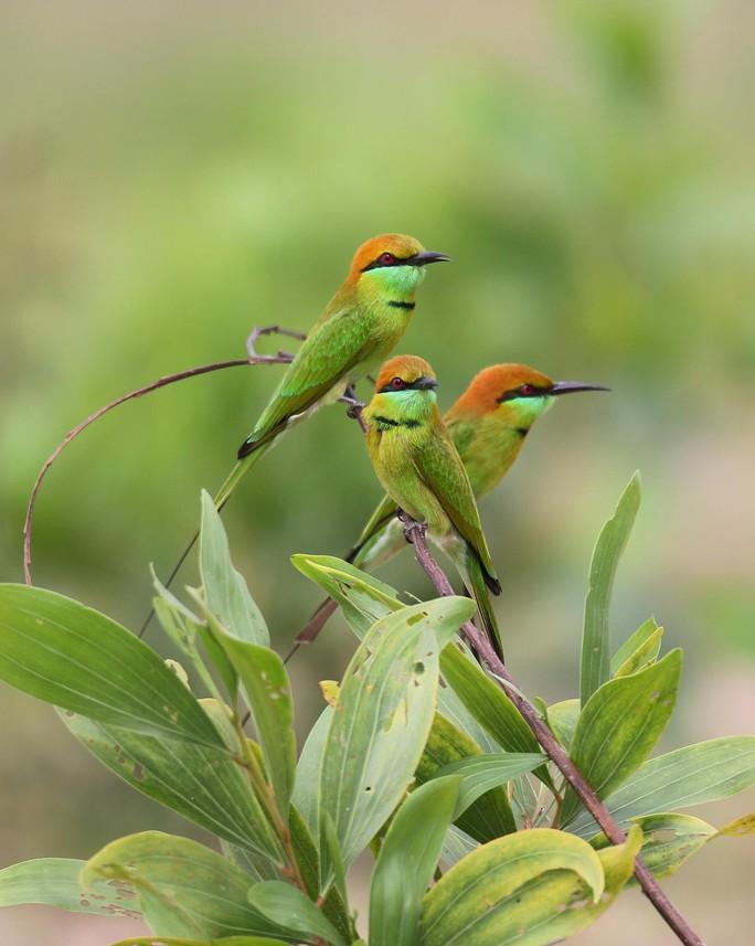 BÀI TẾT CỦA THỜI SỰ: Câu chuyện về những loài chim trời - Ảnh 4.