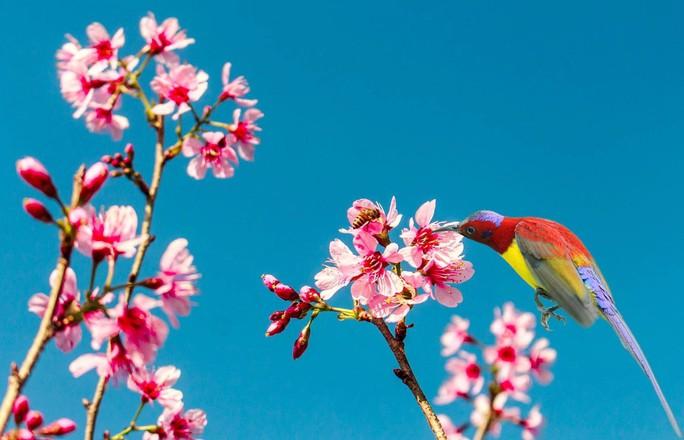 BÀI TẾT CỦA THỜI SỰ: Câu chuyện về những loài chim trời - Ảnh 3.