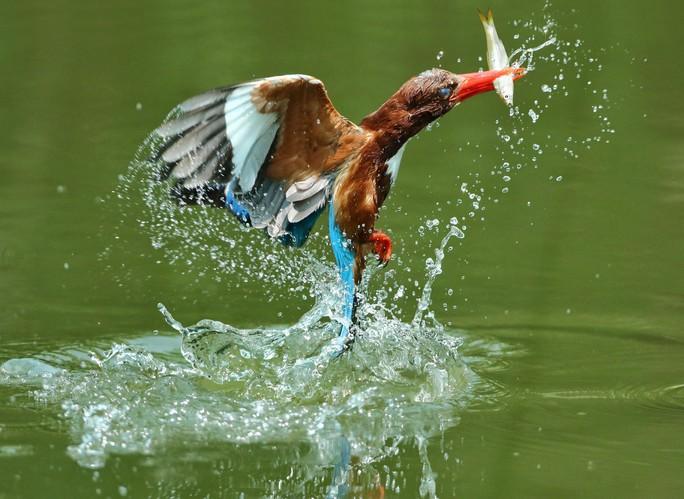 BÀI TẾT CỦA THỜI SỰ: Câu chuyện về những loài chim trời - Ảnh 2.