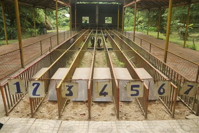 Kỳ thú đua heo cầu may ở Yang Bay - Ảnh 3.