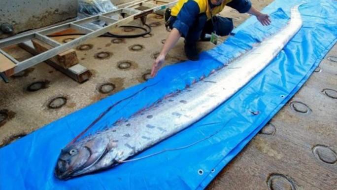 Điềm báo về thảm hoạ chết chóc trôi dạt trên bờ biển Nhật Bản - Ảnh 1.