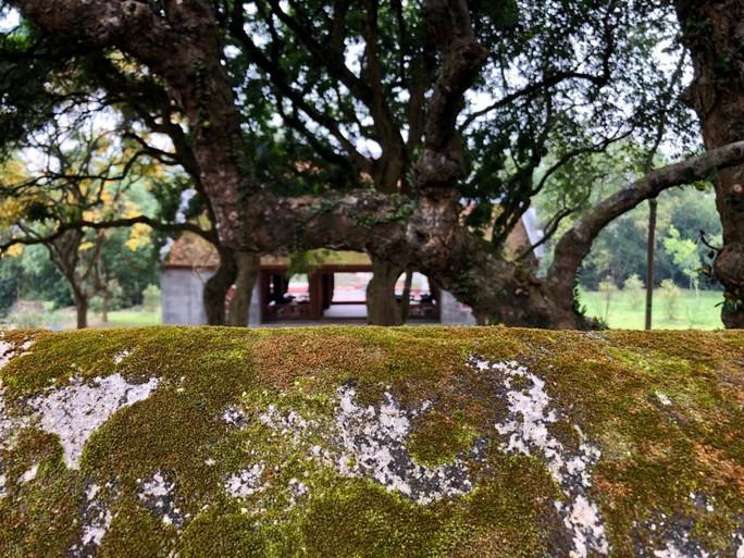Ngắm vẻ đẹp huyền bí, cổ kính của ngôi chùa ngàn tuổi Bổ Đà - Ảnh 10.
