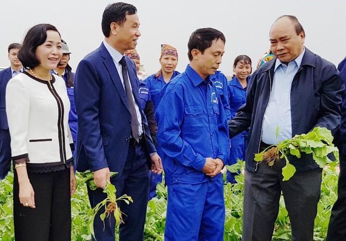 """Thủ tướng: """"Nông nghiệp, nông dân và nông thôn là chủ trương lớn"""" - Ảnh 2."""