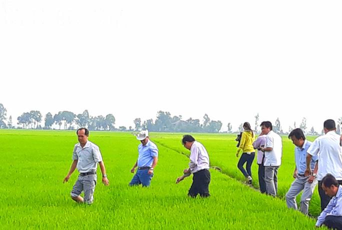 Đầu năm, lãnh đạo tỉnh An Giang lội ruộng thăm đồng cùng nông dân - Ảnh 1.