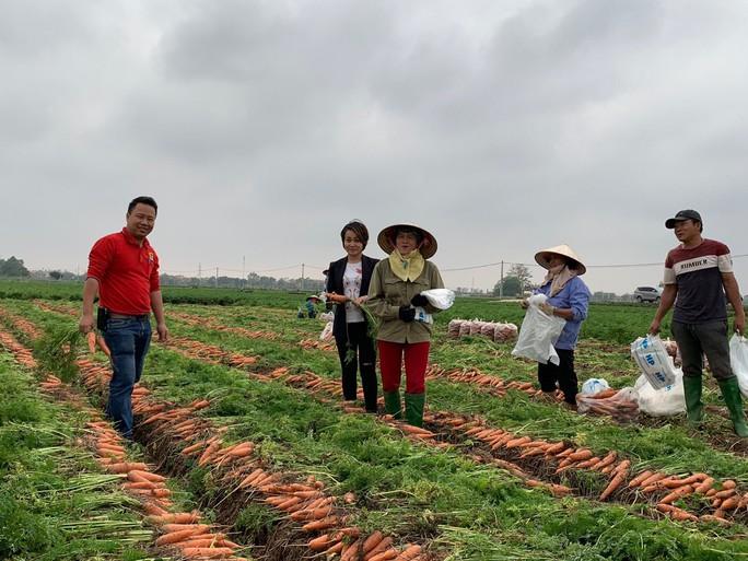Big C sẽ tiêu thụ thêm 100 tấn cà rốt Hải Dương - Ảnh 1.