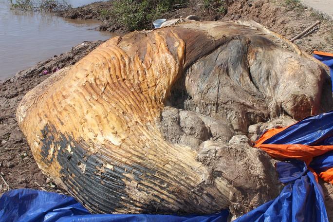 Dân kéo đến xem xác cá voi khủng trôi vào bờ, đang phân hủy nặng - Ảnh 2.