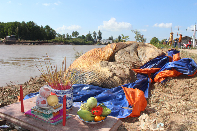 Dân kéo đến xem xác cá voi khủng trôi vào bờ, đang phân hủy nặng - Ảnh 4.