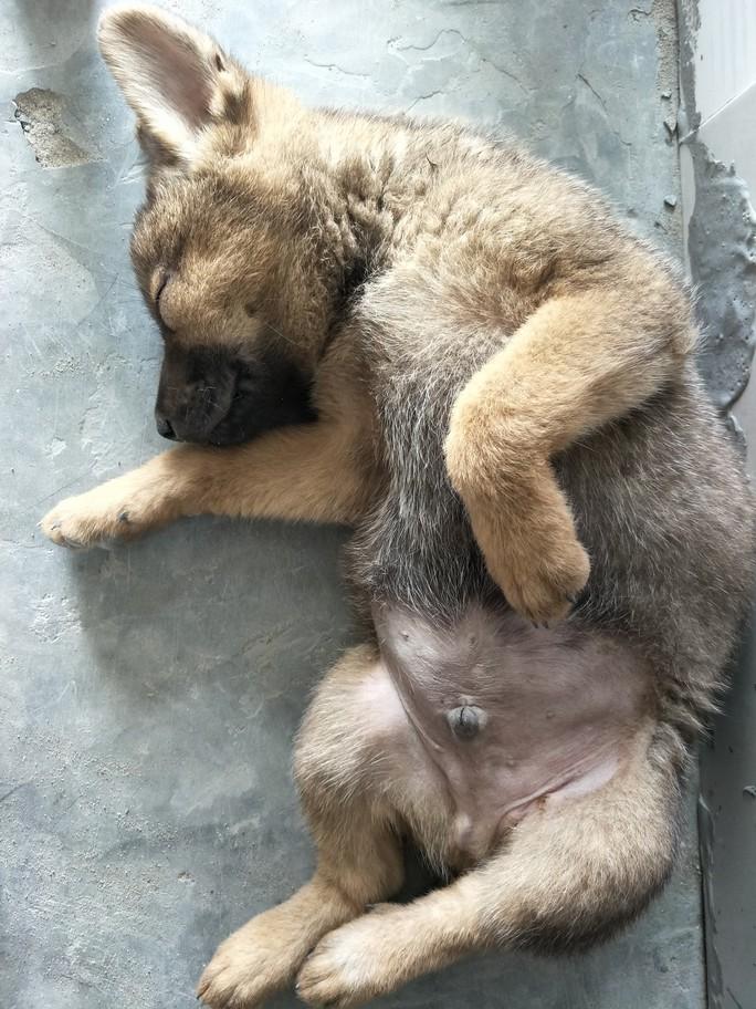 Nhiều người miền Tây mất ngủ vì chó cưng lăn ra chết hàng loạt - Ảnh 6.