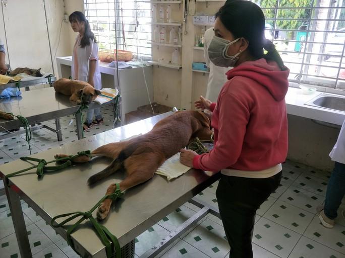 Nhiều người miền Tây mất ngủ vì chó cưng lăn ra chết hàng loạt - Ảnh 2.