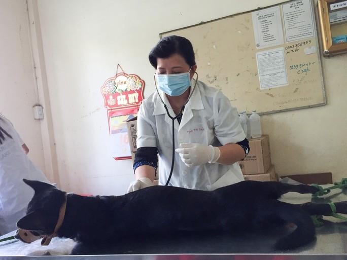 Nhiều người miền Tây mất ngủ vì chó cưng lăn ra chết hàng loạt - Ảnh 13.
