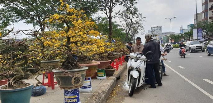 Đà Nẵng: Mai Tết đầy chợ, người mua thưa thớt - Ảnh 1.