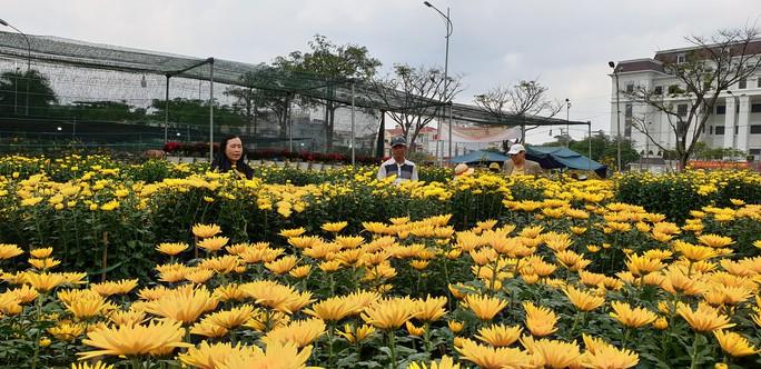 Đà Nẵng: Mai Tết đầy chợ, người mua thưa thớt - Ảnh 8.