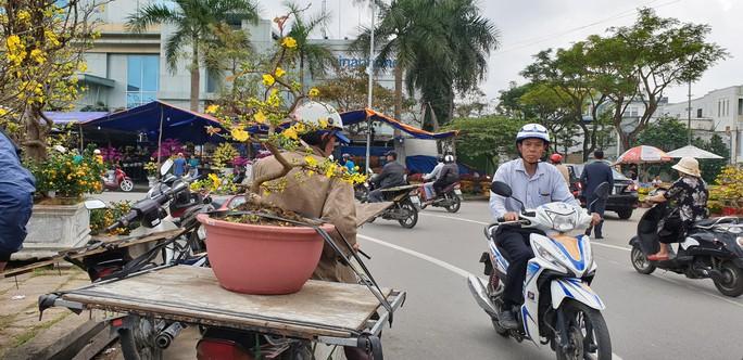 Đà Nẵng: Mai Tết đầy chợ, người mua thưa thớt - Ảnh 11.