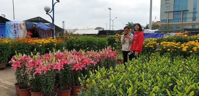 Đà Nẵng: Mai Tết đầy chợ, người mua thưa thớt - Ảnh 13.