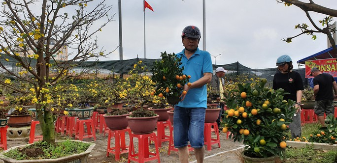 Đà Nẵng: Mai Tết đầy chợ, người mua thưa thớt - Ảnh 14.