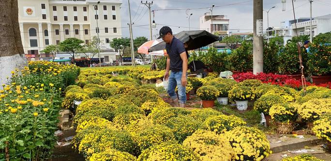 Đà Nẵng: Mai Tết đầy chợ, người mua thưa thớt - Ảnh 6.