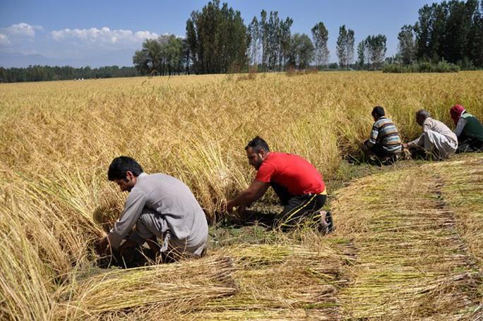 Nguy cơ cạn kiệt lương thực toàn cầu - Ảnh 1.