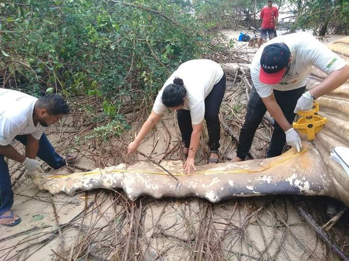 Cá voi dài 11 m chết trong... rừng rậm Amazon - Ảnh 1.