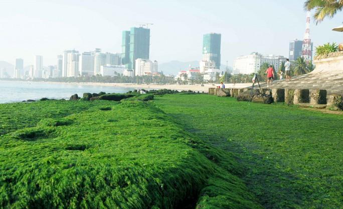 Ngắm bãi rêu xanh tuyệt đẹp hút khách ở Nha Trang - Ảnh 2.