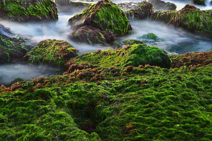 Ngắm bãi rêu xanh tuyệt đẹp hút khách ở Nha Trang - Ảnh 8.